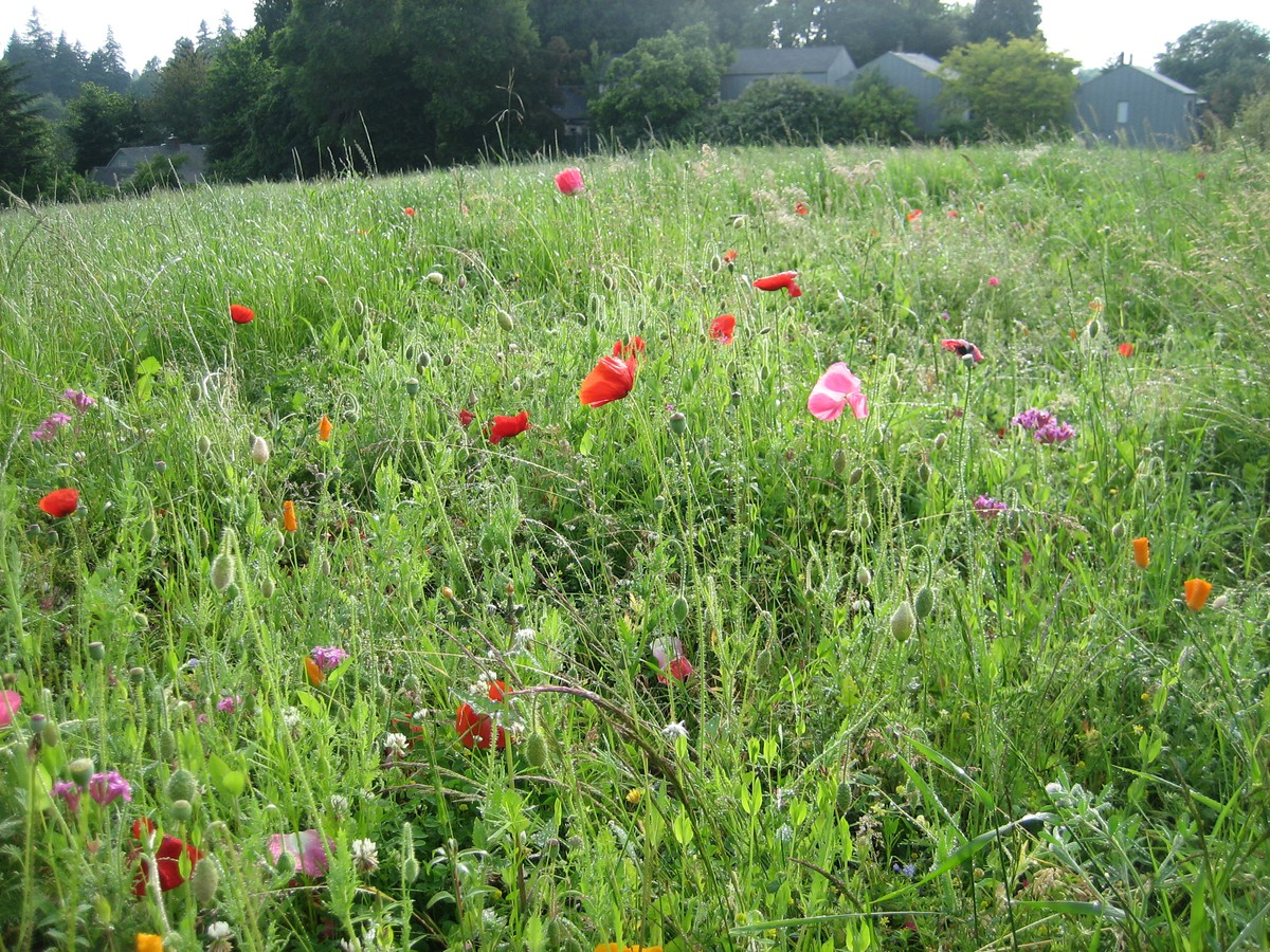 Meadow at the south end of the park