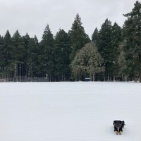 A crisp, snowy field, empty of people. Our floofy dog Kuma sits patiently in the near foreground.